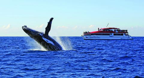 Captain Cook Whale Watch Cruise